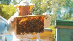 Apicoltore che giudica un favo pieno delle api Apicoltore Inspecting Honeycomb Frame all'arnia Concetto di apicoltura lento archivi video