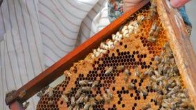 Apicoltore che ispeziona struttura con le api stock footage