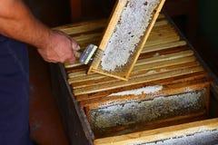 Apicoltore che scoperchia favo con la forcella speciale di apicoltura Concetto di Beeekeeping immagini stock libere da diritti