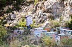 Apicoltore del Cretan fra questi alveari Immagine Stock Libera da Diritti