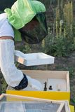 Apicoltore femminile che controlla un alveare per assicurare salute dell'ape fotografia stock libera da diritti