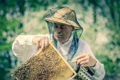 Apicoltore senior che fa ispezione in arnia nella primavera immagine stock libera da diritti