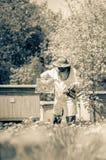 Apicoltore senior che fa ispezione in arnia nella primavera immagini stock libere da diritti