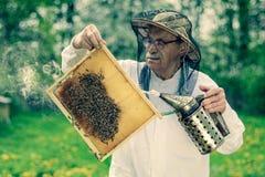 Apicoltore senior che fa ispezione in arnia nella primavera fotografie stock libere da diritti