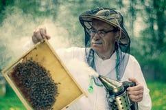 Apicoltore senior che fa ispezione in arnia nella primavera fotografia stock libera da diritti