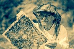 Apicoltore senior che fa ispezione in arnia nella primavera immagine stock