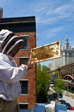 Apicoltore urbano Fotografia Stock