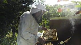 Apicoltore in velo protettivo e cappello che ispeziona i favi con le api archivi video