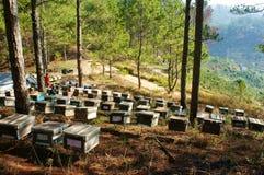 Apicoltura al Vietnam, alveare, miele dell'ape Fotografie Stock