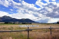 Apicoltura nel Montana Fotografia Stock