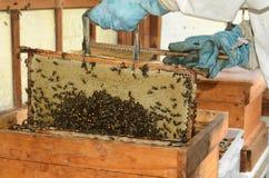 apiculteur photos stock