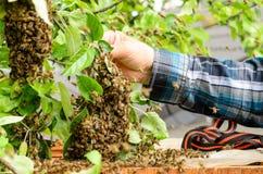 apiculteur photographie stock libre de droits