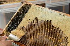 apiculteur image stock