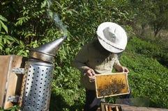 apiculteur photos libres de droits
