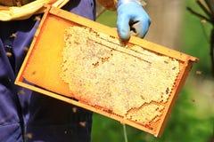 Apiculteur avec le nid d'abeilles image libre de droits