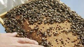 Apiculteur avec les ruches et le nid d'abeilles banque de vidéos