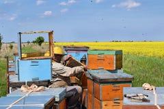 Apiculteur et ses ruches mobiles photos stock