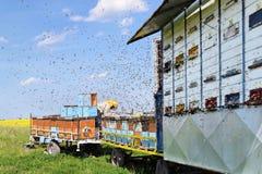 Apiculteur et ses ruches mobiles image stock