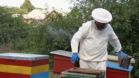 Apiculteur inspectant le nid d'abeilles banque de vidéos