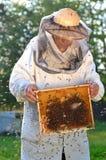 Apiculteur supérieur expérimenté faisant l'inspection et l'essaim des abeilles photographie stock libre de droits