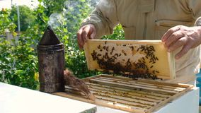 Apiculteur sur le rucher L'apiculteur travaille avec des abeilles et des ruches sur le rucher clips vidéos
