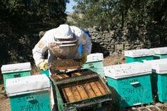 Apiculteur travaillant au rucher photos stock