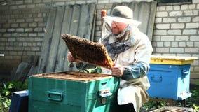 Apiculteur travaillant avec des abeilles et des ruches clips vidéos