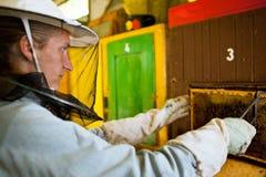 Apiculteur travaillant dans un rucher image stock