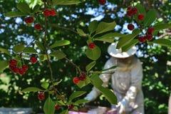 Apiculteur vu par le cerisier images libres de droits