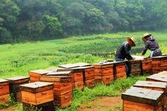apiculteurs Photographie stock libre de droits