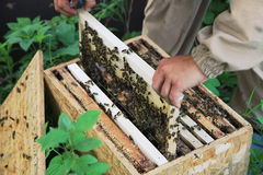 apicultor imagen de archivo libre de regalías