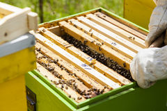 apicultor Fotos de archivo