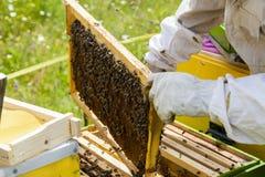 apicultor Fotografía de archivo