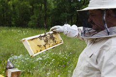 apicultor Fotos de archivo libres de regalías