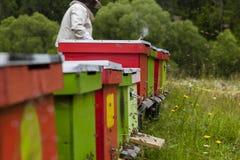 apicultor Foto de archivo libre de regalías