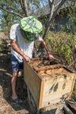 apicultor Imagen de archivo