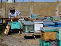apicultor almacen de video