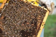 apicultor Imagenes de archivo