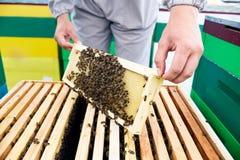 Apicultor Checking Bees imagenes de archivo