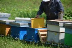 Apicultor con el nuevo peine de la miel Imagen de archivo