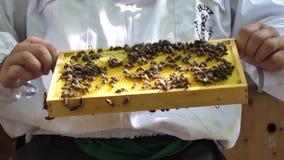 Apicultor con el peine de la miel en las manos almacen de video