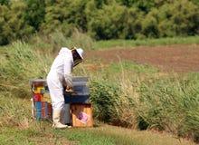 Apicultor con el traje protector blanco mientras que recoge la miel Fotos de archivo libres de regalías
