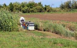 Apicultor con el traje protector mientras que recoge la miel de h Foto de archivo