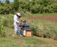 Apicultor con el traje protector que cosecha la miel y muchas colmenas Fotos de archivo