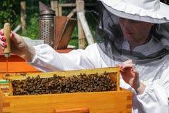 Apicultor de la mujer con las abejas Imagen de archivo libre de regalías