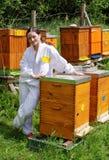 Apicultor de la mujer con las abejas Imagen de archivo