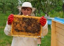 Apicultor de la mujer que lleva a cabo el marco del panal con las abejas Fotos de archivo libres de regalías