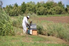 Apicultor durante la cosecha de la miel y de muchas colmenas con las abejas en th Fotos de archivo libres de regalías