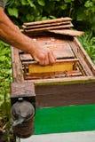Apicultor en el trabajo Imagenes de archivo