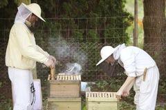 Apicultor en el trabajo con las abejas Foto de archivo libre de regalías